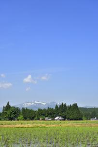 すがすがしい平泉荘園 骨寺の水田の写真素材 [FYI01255090]