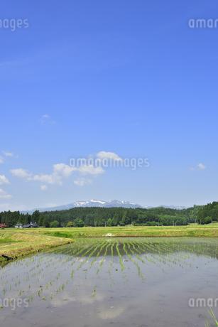 すがすがしい平泉荘園 骨寺の水田の写真素材 [FYI01255091]
