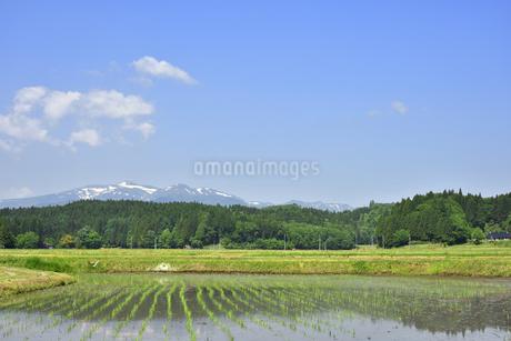 すがすがしい平泉荘園 骨寺の水田の写真素材 [FYI01255092]