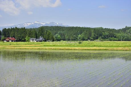 すがすがしい平泉荘園 骨寺の水田の写真素材 [FYI01255095]