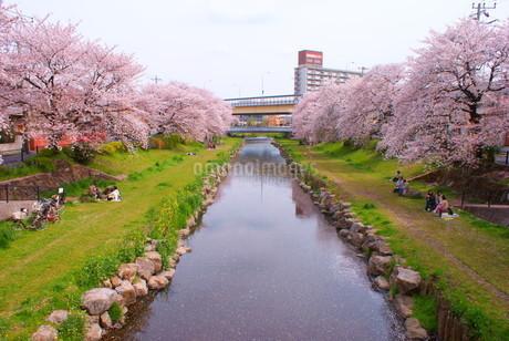 春の野川(調布市)の写真素材 [FYI01255144]