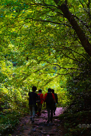 森に入る人々の写真素材 [FYI01255148]