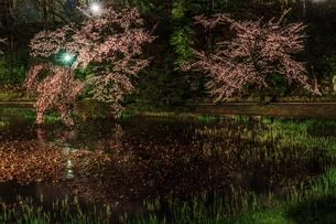 春のライトアップされた久保田城跡の風景の写真素材 [FYI01255203]