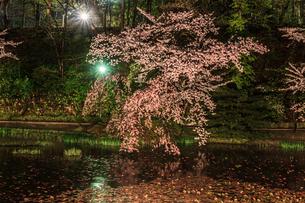 春のライトアップされた久保田城跡の風景の写真素材 [FYI01255204]