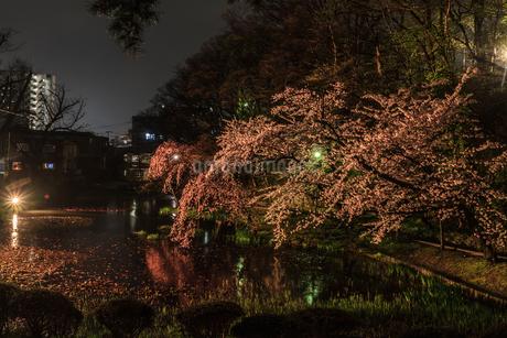 春のライトアップされた久保田城跡の風景の写真素材 [FYI01255205]