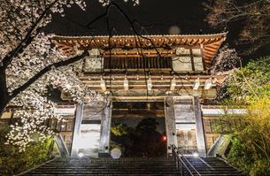 春のライトアップされた久保田城跡の風景の写真素材 [FYI01255212]