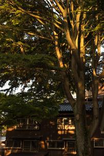 夕日を浴びる木の写真素材 [FYI01255213]