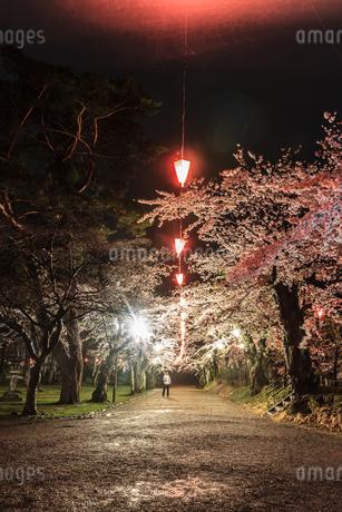 春のライトアップされた久保田城跡の風景の写真素材 [FYI01255220]