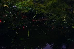 鶴岡八幡宮の蛍の写真素材 [FYI01255248]