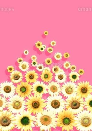 花の写真素材 [FYI01255262]