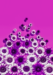 花の写真素材 [FYI01255264]