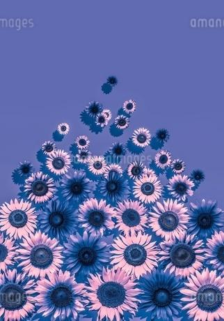 花の写真素材 [FYI01255265]