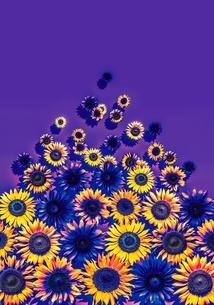花の写真素材 [FYI01255267]