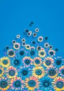 花の写真素材 [FYI01255268]