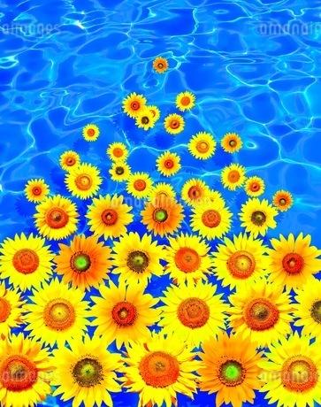 花の写真素材 [FYI01255270]