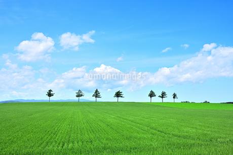 めまんべつ メルヘンの丘 かわいいの写真素材 [FYI01255437]