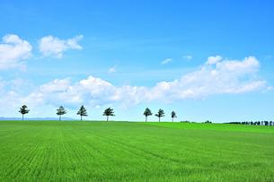 めまんべつ メルヘンの丘 かわいいの写真素材 [FYI01255438]
