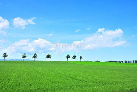 めまんべつ メルヘンの丘 かわいいの写真素材 [FYI01255439]