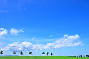 めまんべつ メルヘンの丘 かわいいの写真素材 [FYI01255440]