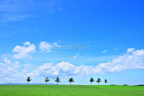 めまんべつ メルヘンの丘 かわいいの写真素材 [FYI01255441]