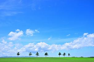 めまんべつ メルヘンの丘 かわいいの写真素材 [FYI01255442]
