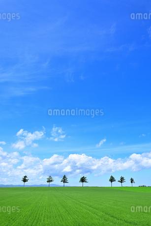 めまんべつ メルヘンの丘 かわいいの写真素材 [FYI01255445]