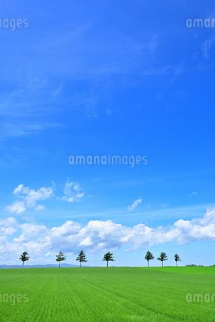 めまんべつ メルヘンの丘 かわいいの写真素材 [FYI01255446]