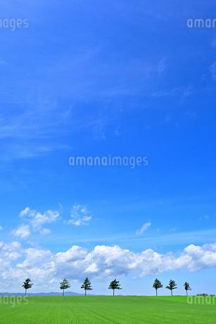 めまんべつ メルヘンの丘 かわいいの写真素材 [FYI01255447]