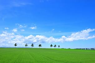 めまんべつ メルヘンの丘 かわいいの写真素材 [FYI01255454]