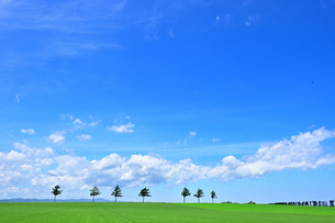 めまんべつ メルヘンの丘 かわいいの写真素材 [FYI01255455]