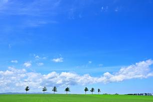 めまんべつ メルヘンの丘 かわいいの写真素材 [FYI01255456]
