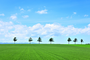 めまんべつ メルヘンの丘 かわいいの写真素材 [FYI01255457]