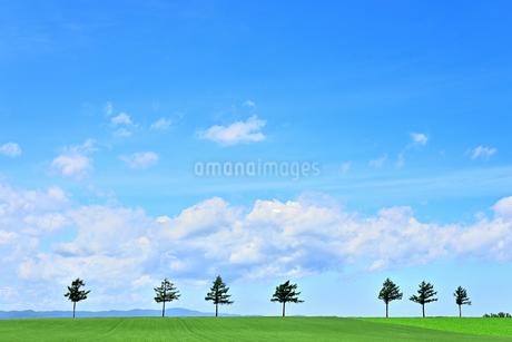 めまんべつ メルヘンの丘 かわいいの写真素材 [FYI01255458]