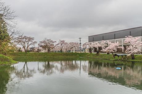 春の新庄城跡の風景の写真素材 [FYI01255476]