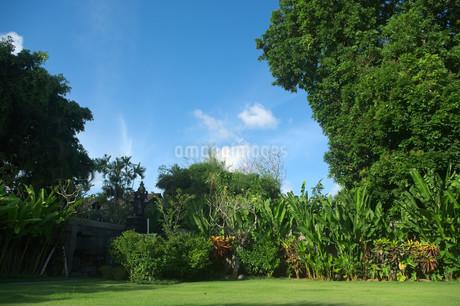 青空にそびえ立つ大きな木のある庭の写真素材 [FYI01255480]