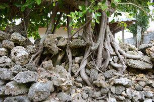 石垣と木の写真素材 [FYI01255531]