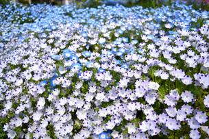 愛鷹運動公園の花の写真素材 [FYI01255547]