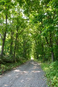 新緑に囲まれた砂利道の写真素材 [FYI01255677]