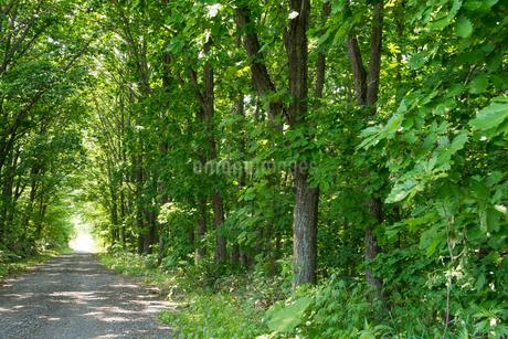 新緑に囲まれた砂利道の写真素材 [FYI01255678]
