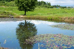池の畔に立つ緑のナナカマドの写真素材 [FYI01255685]