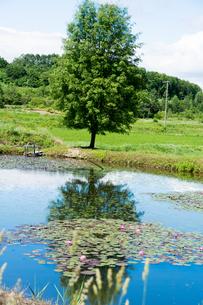池の畔に立つ緑のナナカマドの写真素材 [FYI01255686]
