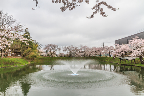 春の新庄城跡の風景の写真素材 [FYI01255995]