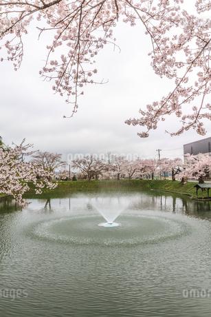 春の新庄城跡の風景の写真素材 [FYI01255996]