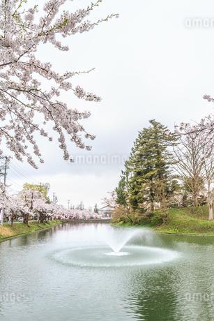 春の新庄城跡の風景の写真素材 [FYI01255999]