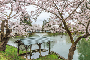 春の新庄城跡の風景の写真素材 [FYI01256000]
