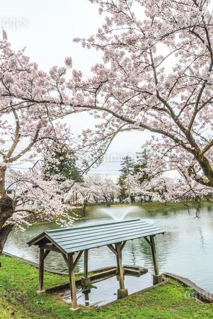 春の新庄城跡の風景の写真素材 [FYI01256001]