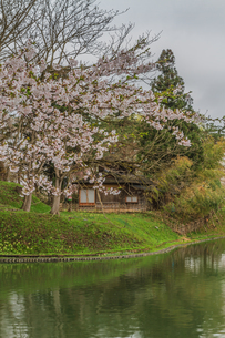 春の新庄城跡の風景の写真素材 [FYI01256002]