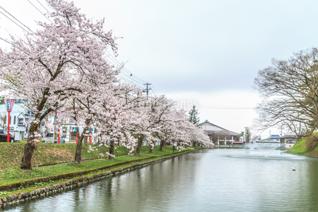 春の新庄城跡の風景の写真素材 [FYI01256004]