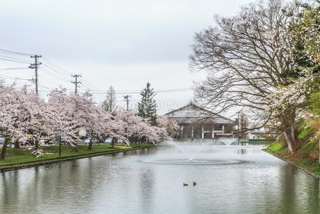 春の新庄城跡の風景の写真素材 [FYI01256006]