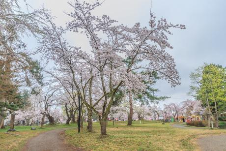 春の新庄城跡の風景の写真素材 [FYI01256012]